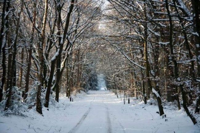 Winter Wandel arrangement Crossmoor
